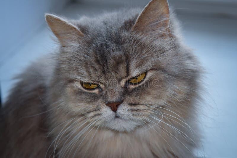 Gato confuso imagenes de archivo