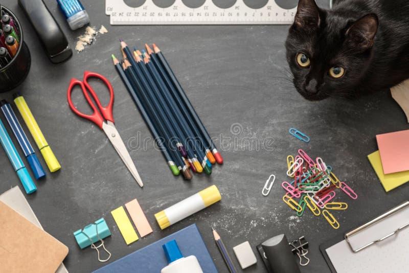 Gato creativo del esencial de la escuela del ambiente del estudio fotografía de archivo