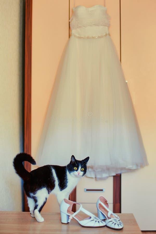 Gato curioso, ao lado do vestido de noiva da amante imagens de stock royalty free