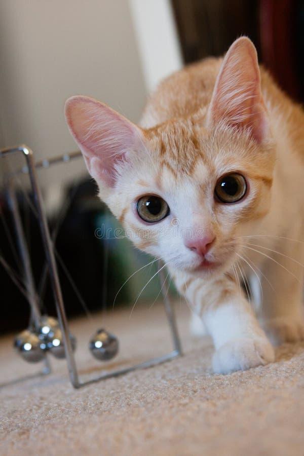 Gato curioso en la cámara fotografía de archivo libre de regalías