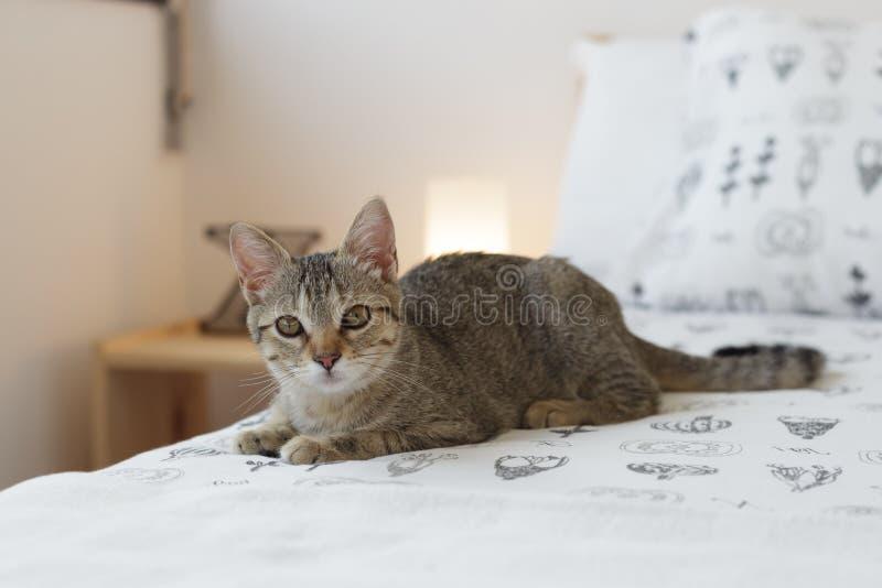 Gato curioso na cama fotografia de stock royalty free