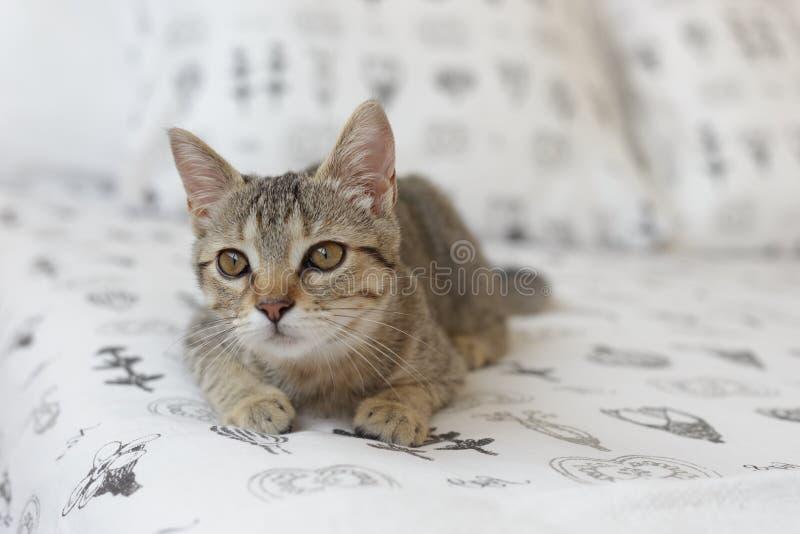 Gato curioso na cama imagens de stock
