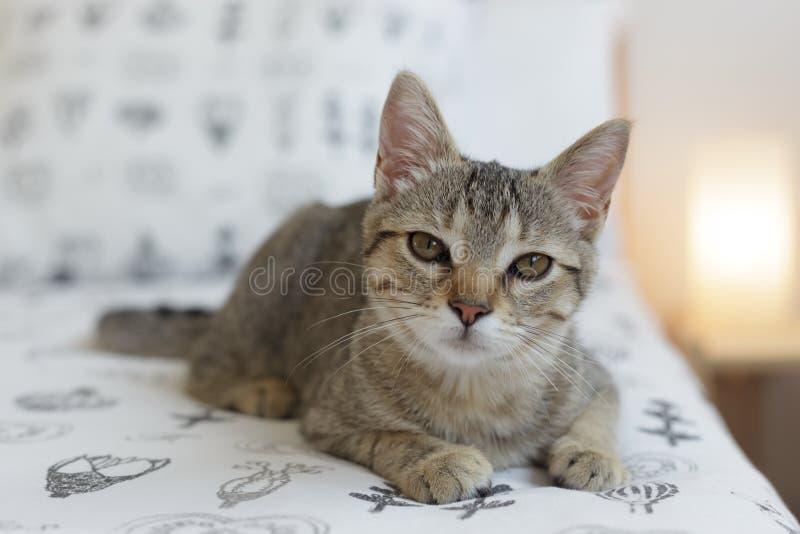 Gato curioso na cama fotos de stock