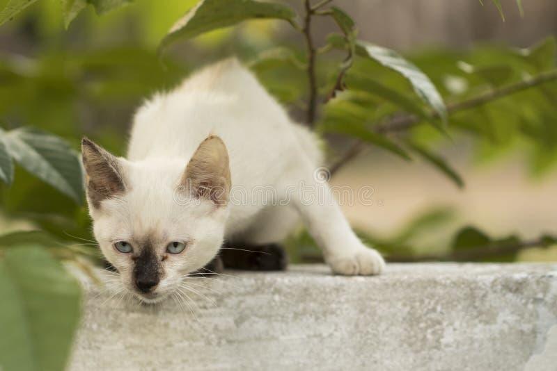 Gato curioso pequeno que olha fixamente e que joga ao redor Olhos bonitos M fotografia de stock
