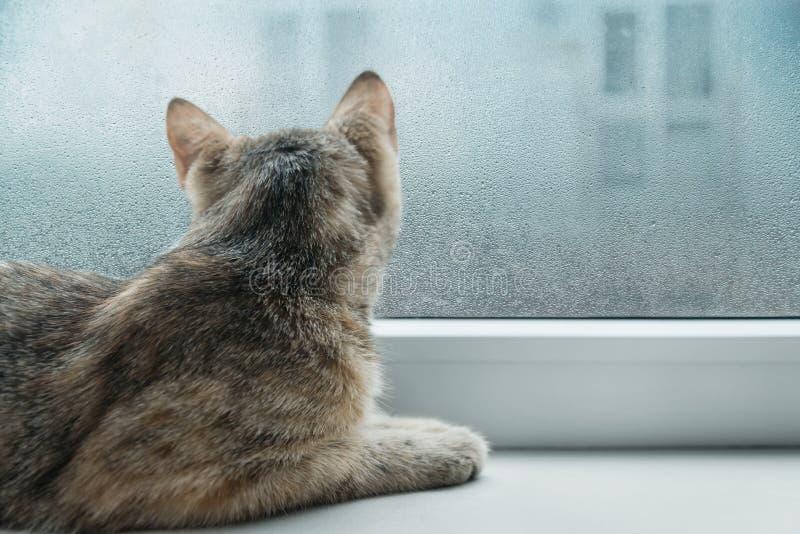 Gato curioso que olha a uma janela no tempo chuvoso fotos de stock royalty free