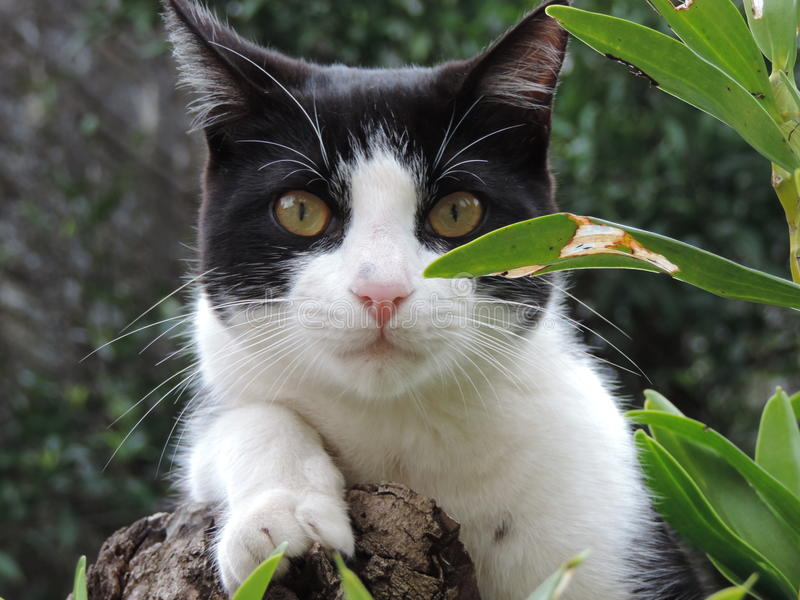 Gato curvado da cauda fotografia de stock royalty free