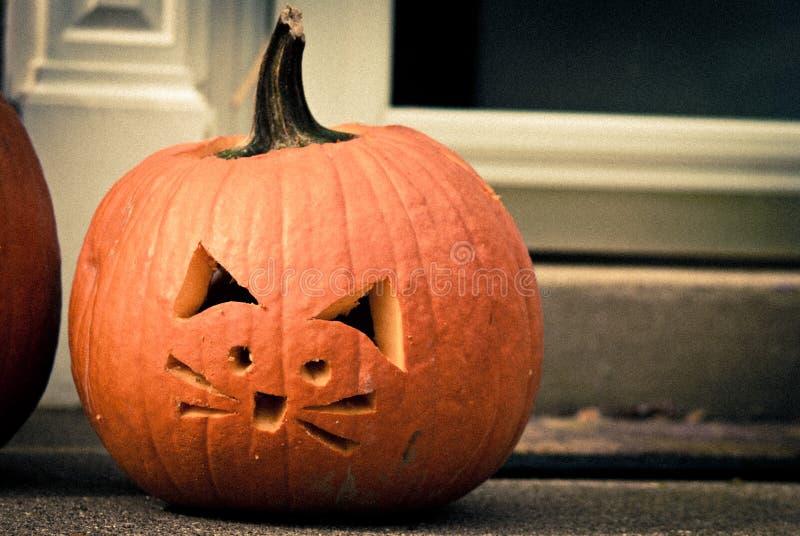 Gato da abóbora de Halloween imagens de stock