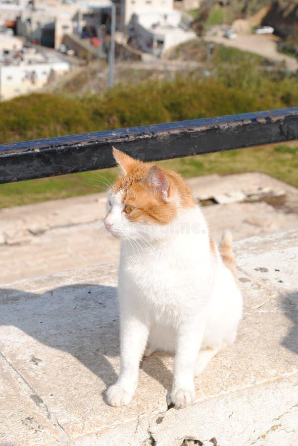 Gato da jarda na plataforma de vista fotografia de stock