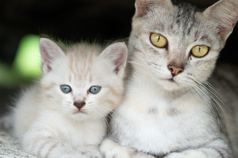 Gato da mamã com o gatinho exterior fotografia de stock royalty free