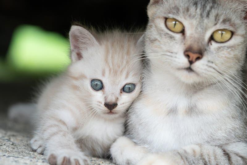 Gato da mamã com o gatinho exterior imagem de stock