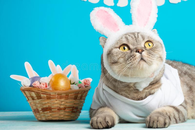 Gato da Páscoa com as orelhas do coelho com ovos da páscoa Gatinho bonito foto de stock royalty free