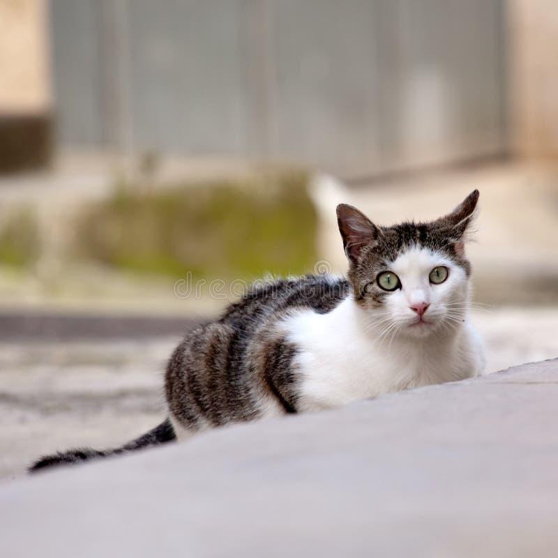 Gato da rua fotos de stock