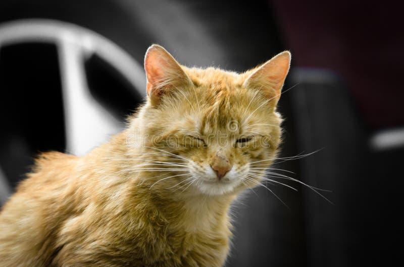 Gato da rua do gengibre no fundo das rodas dos olhares do carro nas expressões incomuns da câmera foto de stock royalty free