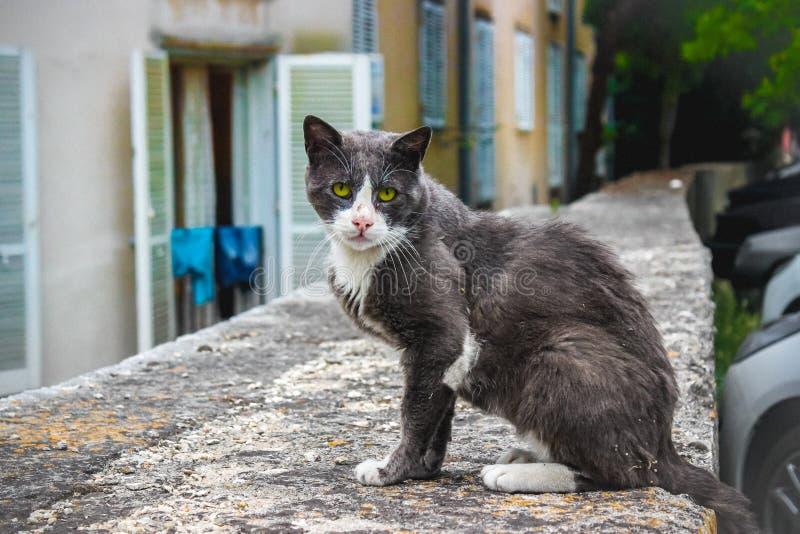 Gato da rua na Croácia fotografia de stock royalty free