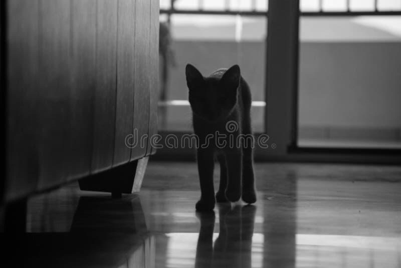 Gato da sombra fotografia de stock