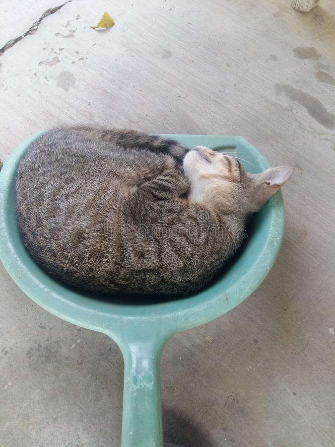 Gato da vaquinha em um pá-de-lixo foto de stock royalty free