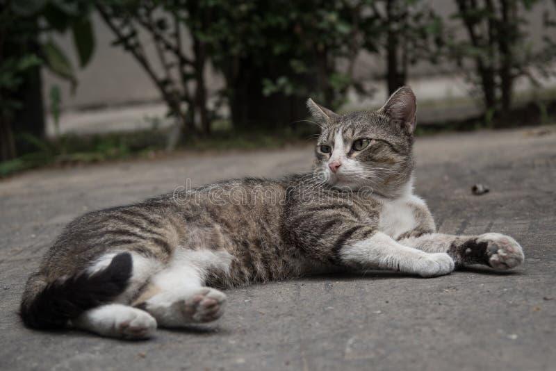 Gato de aleia que encontra-se no quintal fotos de stock