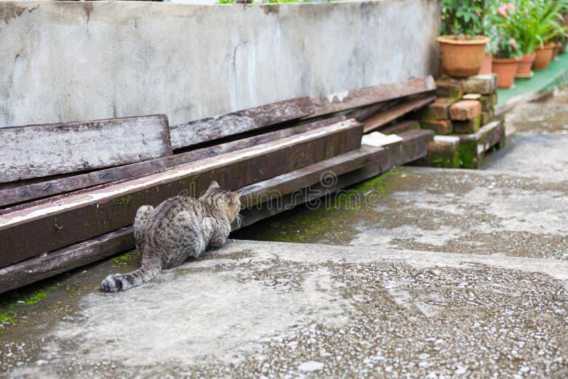 Gato de gato atigrado gris adulto afuera fotos de archivo