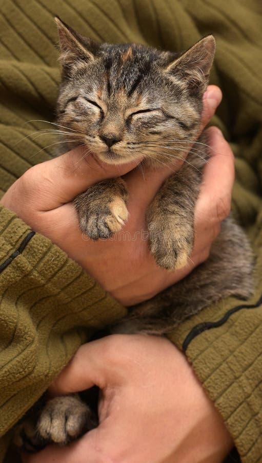Gato de gato atigrado joven foto de archivo