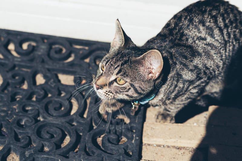 Gato de gato atigrado joven alerta en el felpudo fotos de archivo