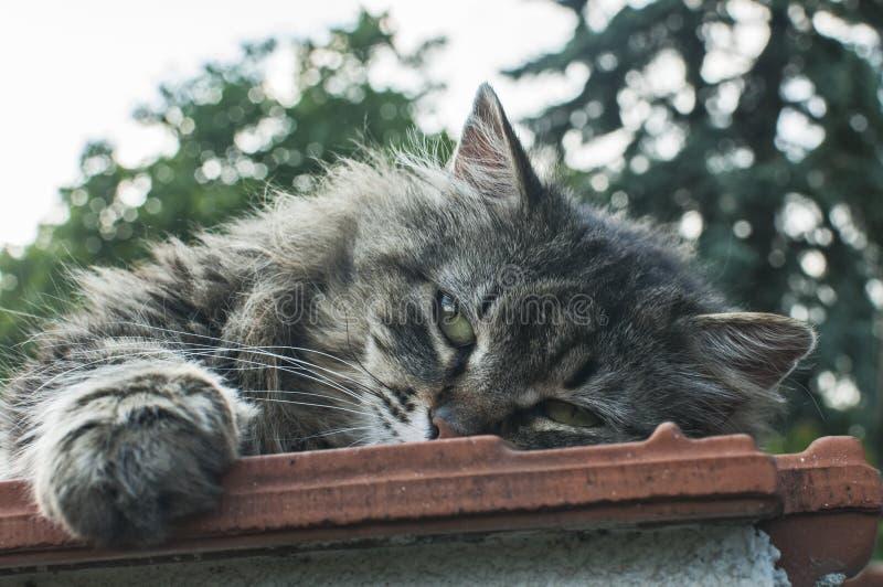 Gato de gato atigrado que miente en el top de la pared imágenes de archivo libres de regalías