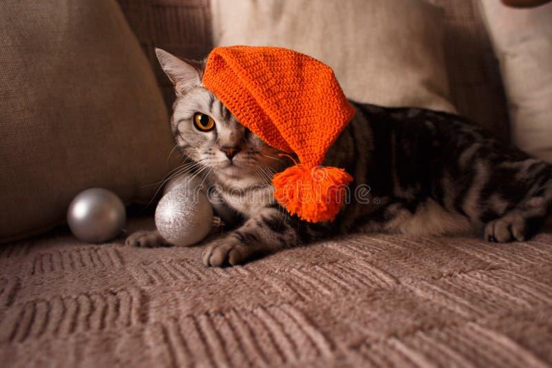 Gato de gato atigrado que miente en un sofá en un sombrero de la Navidad imagen de archivo libre de regalías