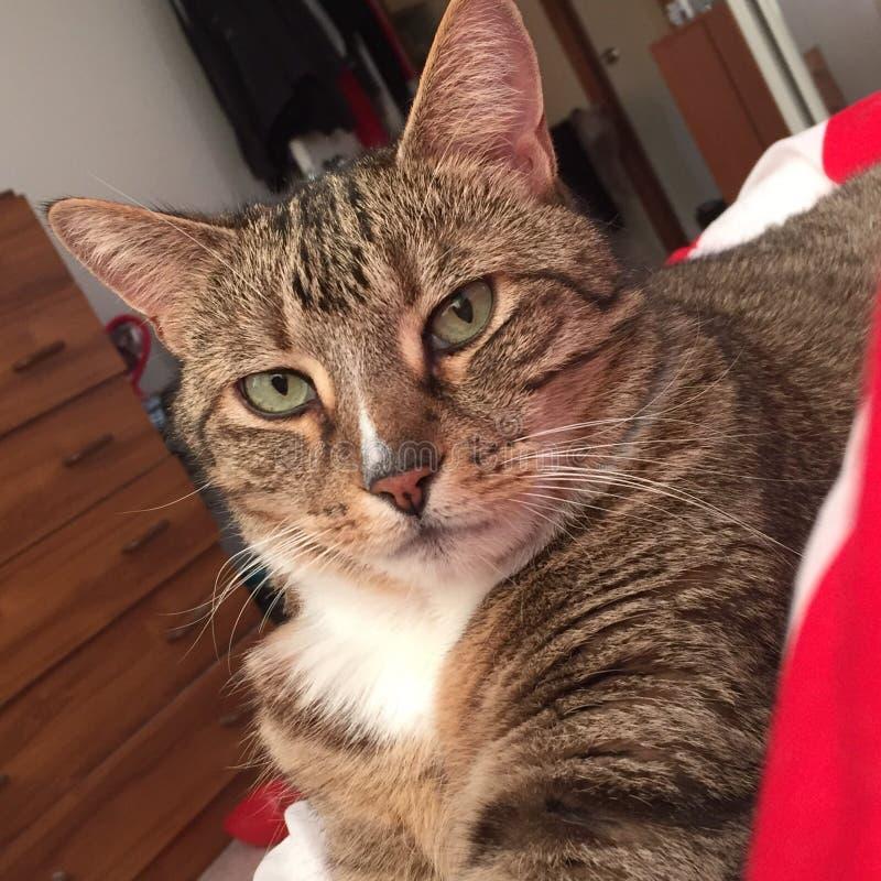 Gato de gato atigrado que se relaja en manta fotografía de archivo libre de regalías