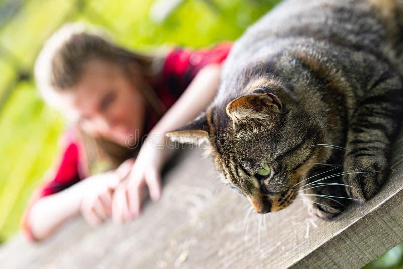 Gato de gato atigrado que se relaja en una tabla del jardín en sol imagenes de archivo