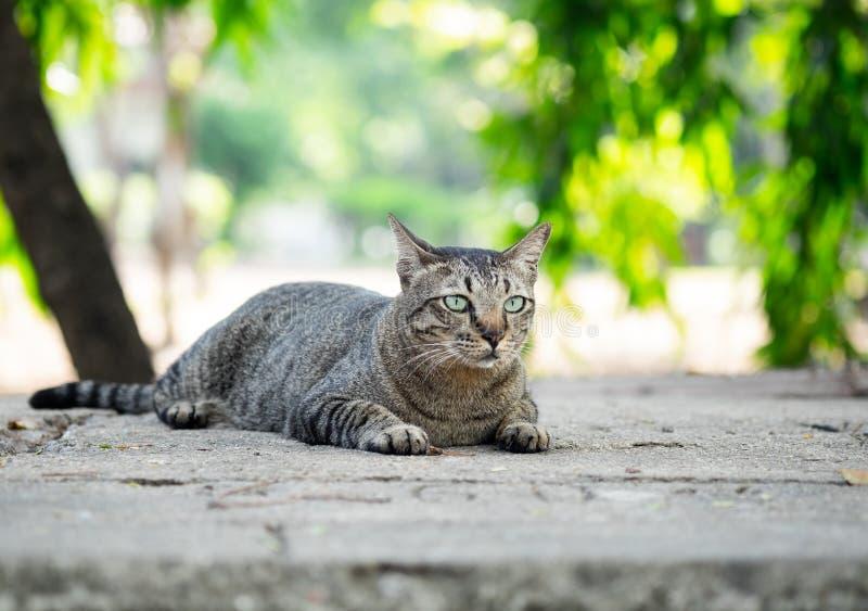 Gato de gato atigrado que se sienta en el piso en el jardín foto de archivo