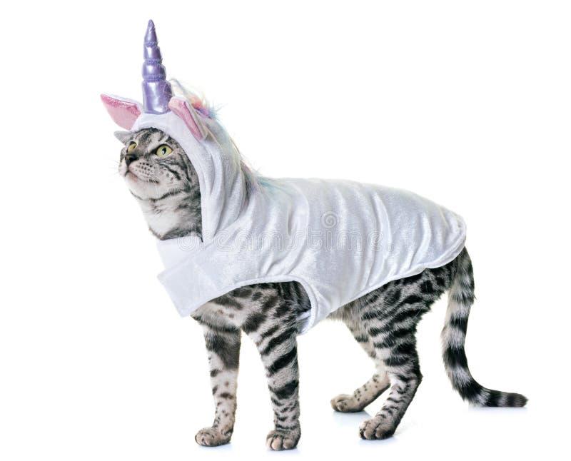 Gato de Bengal vestido fotos de stock royalty free