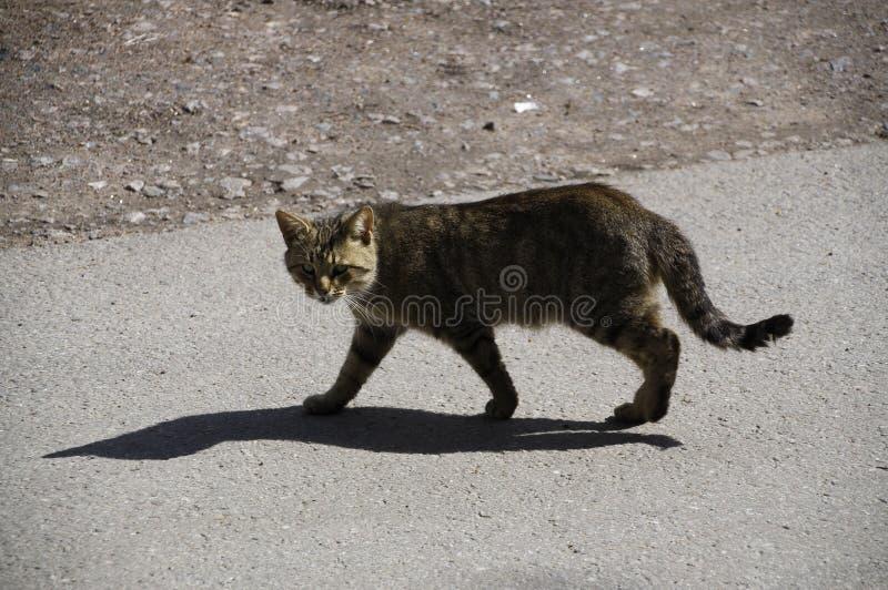 Gato de Brown fotos de archivo