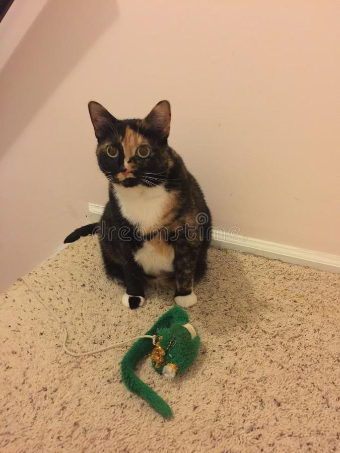 Gato de calicó con el ratón verde del juguete imagen de archivo