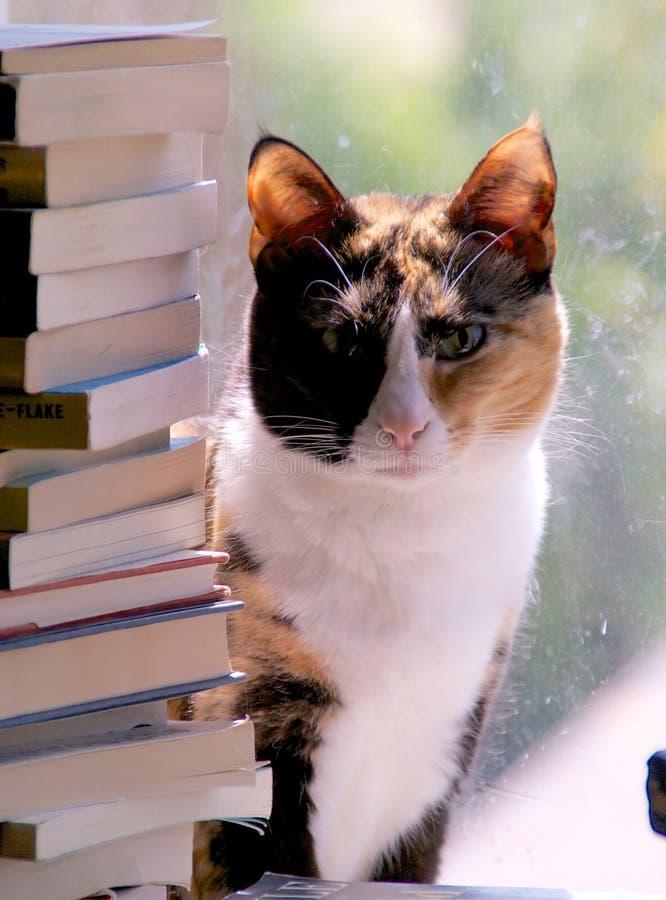 Gato de calicó con la pila de libros foto de archivo libre de regalías