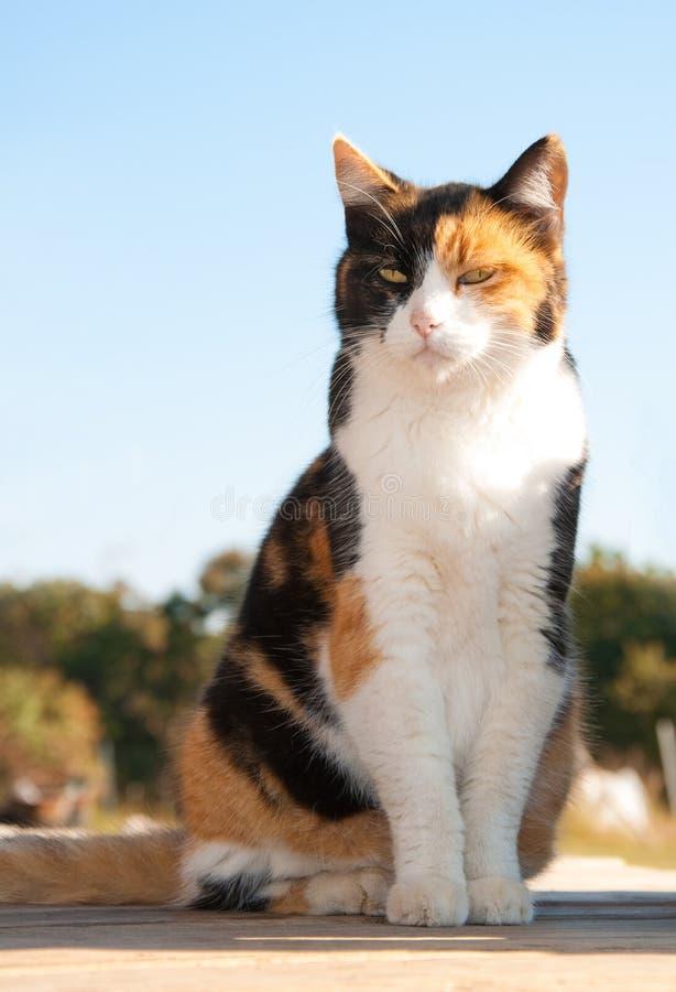 Gato de calicó hermoso que se sienta en el pórtico imágenes de archivo libres de regalías