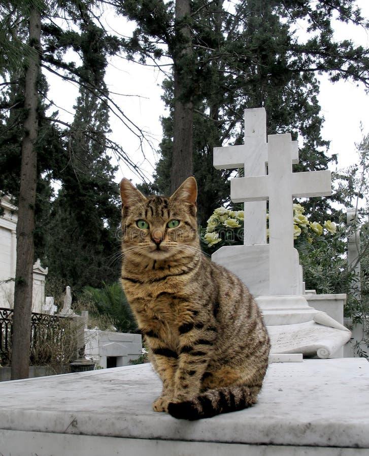 Gato de callejón imagen de archivo