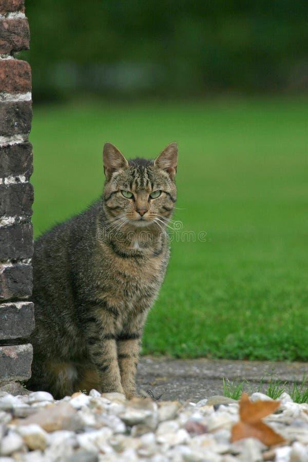 Gato de casa imagem de stock