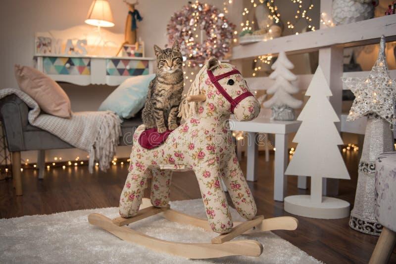 Gato de casa que se sienta en un caballo mecedora con la decoración de la Navidad fotografía de archivo libre de regalías