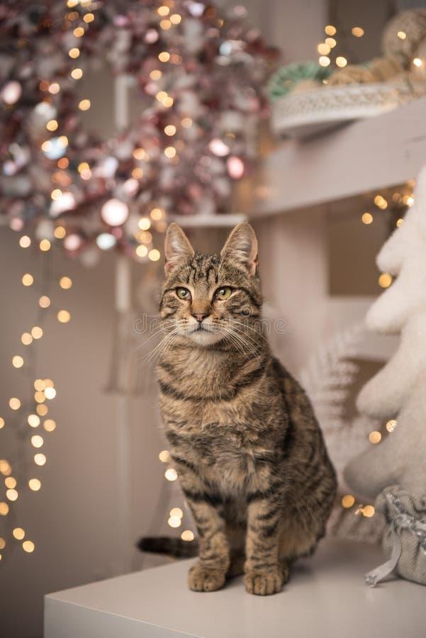 Gato de casa que se sienta en una tabla con la decoración de la Navidad fotografía de archivo libre de regalías