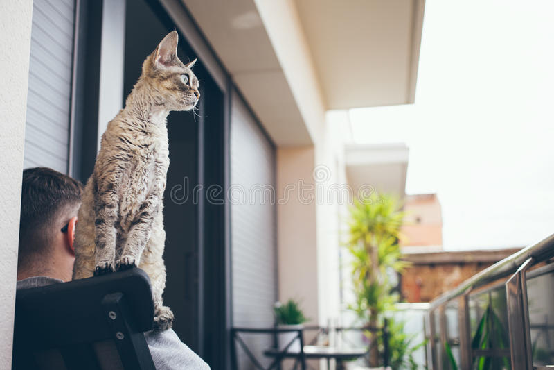 Gato de Devon Rex con el ser humano en el balcón que se sienta en silla fotos de archivo libres de regalías