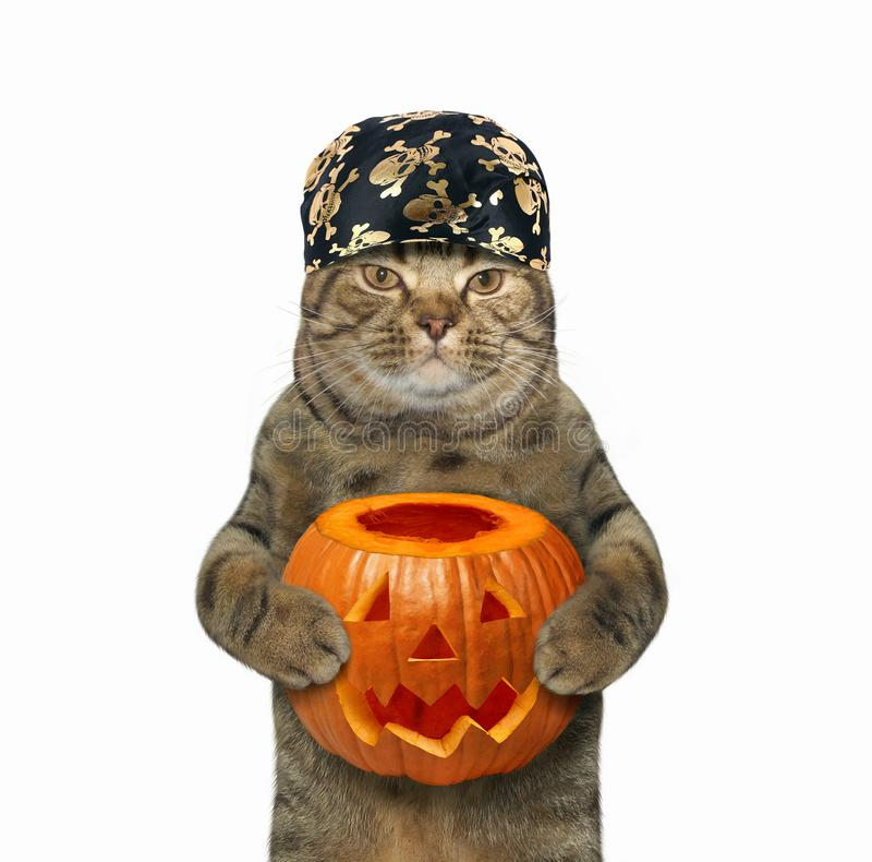 Gato de Dia das Bruxas que guarda a abóbora fotos de stock