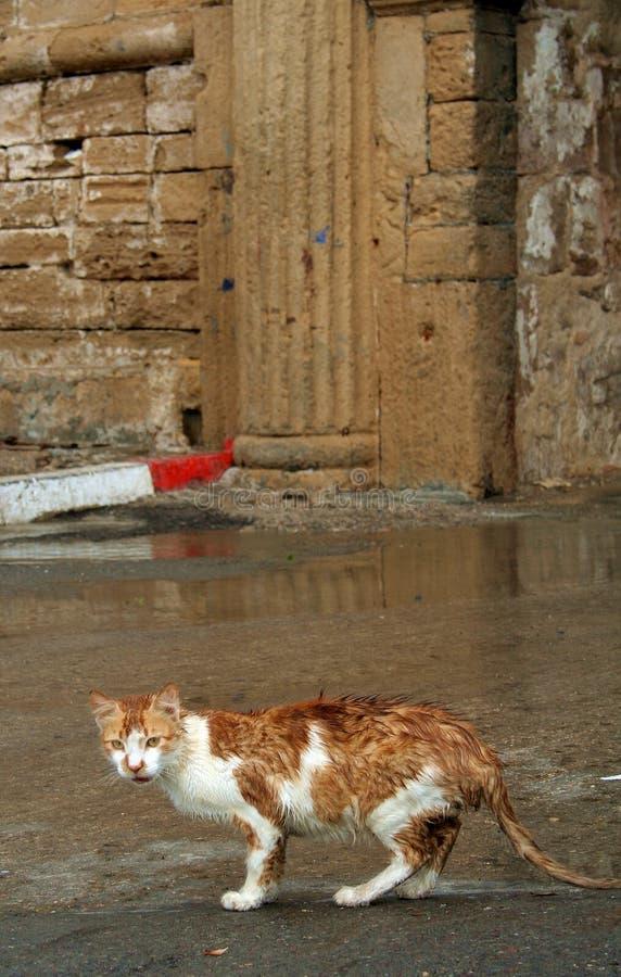 Gato de Essaouira imagen de archivo