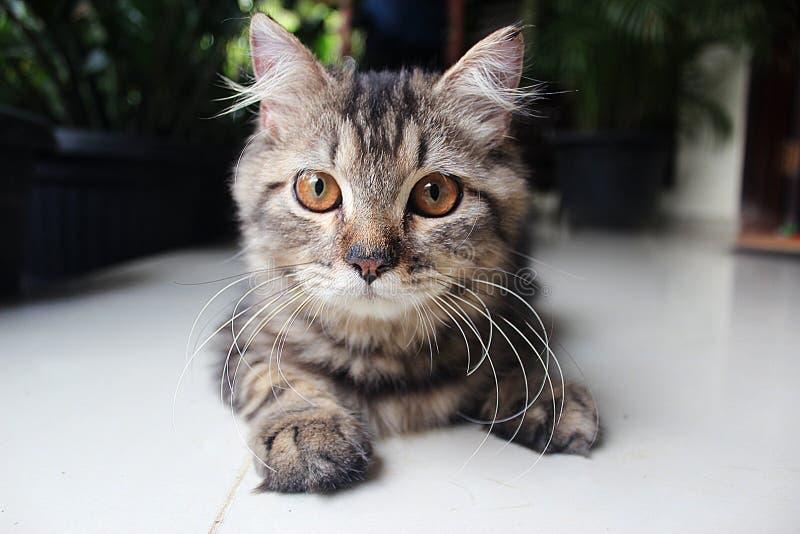 Gato de Exspression foto de archivo
