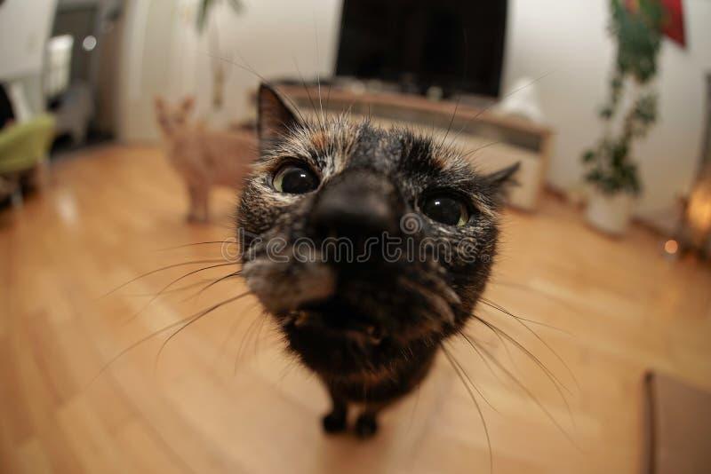 Gato de Fisheye fotografia de stock