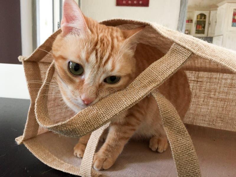 Gato de gatinho brincando escondido em saco de tela imagens de stock