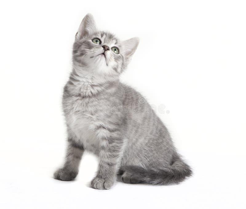 Gato de gato atigrado gris que mira para arriba imagenes de archivo