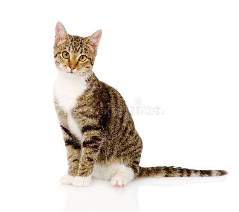 Gato de gato atigrado joven En el fondo blanco foto de archivo