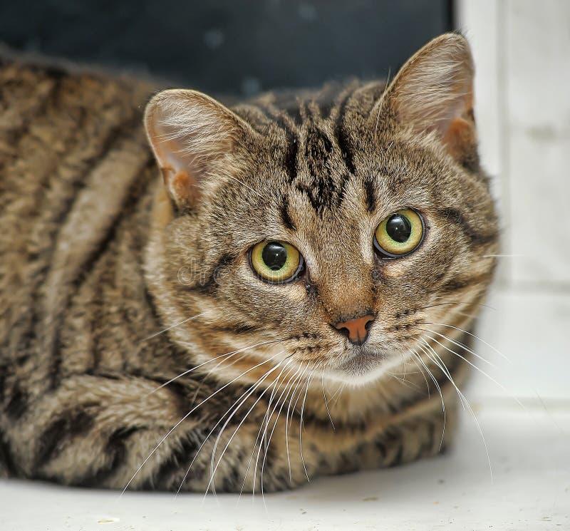 Gato de gato atigrado lindo imágenes de archivo libres de regalías