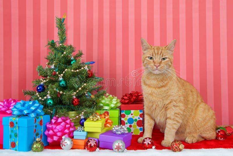 Gato de gato malhado alaranjado pela árvore de Natal pequena imagens de stock