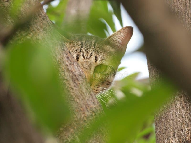 Gato de gato malhado bonito na árvore e olhar-nos fixamente imagens de stock