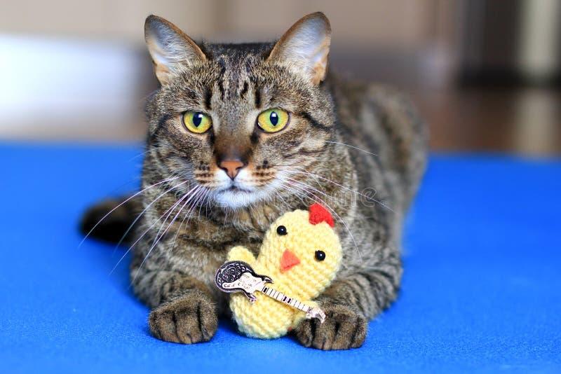 Gato de gato malhado com um brinquedo fotografia de stock royalty free